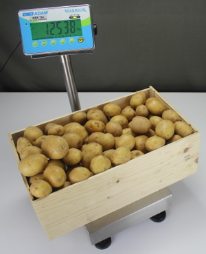 Warrior Scales Weighing Crate of Potatoes